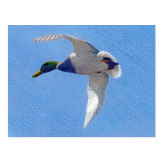 Fliegen-Stockente farbige Bleistift-Postkarte Postkarte