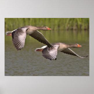 Fliegen-Vogel-Plakat Poster