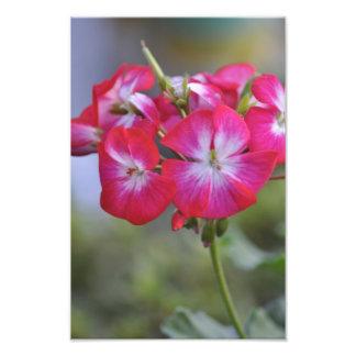Flores, fleurs photographies