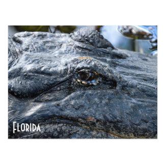Florida-Alligatorpostkarte Postkarte