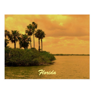 Florida-Palme-Träumerei Postkarte