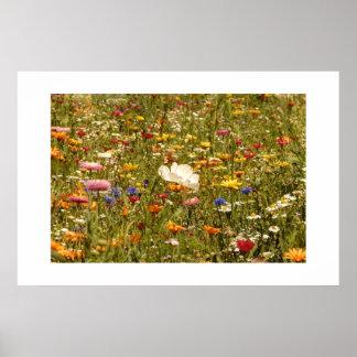 Flower - Meadow