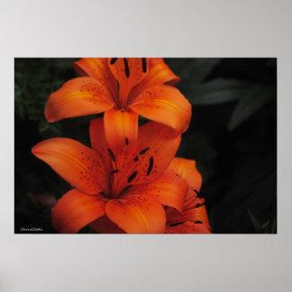 Flower Affiches