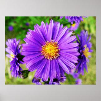 Flower power pourpre ! Copie