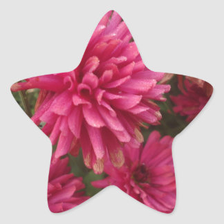 Flowers-005.JPG Stickers En Étoile