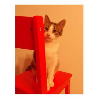 Flüchtiger Blick ein Boo-Kätzchen Postkarte