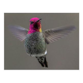 Flying Hummingbird Postkarte