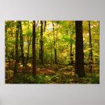"""""""Forêt d'érable """" Posters"""