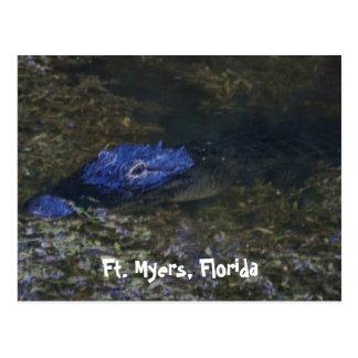 Fort- Myersalligator Postkarte