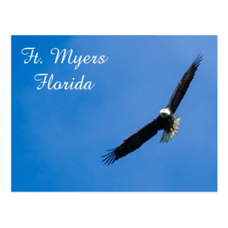Fort- MyersWeißkopfseeadlerpostkarte Postkarte