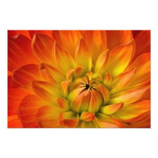 Fortement en photographies de fleur de Dalhia avec