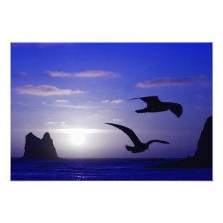 "Foto ""der doppelten Vogel-Blues"""