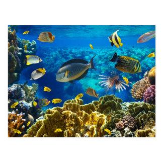 Foto eines tropischen Fisches auf einem Korallenri