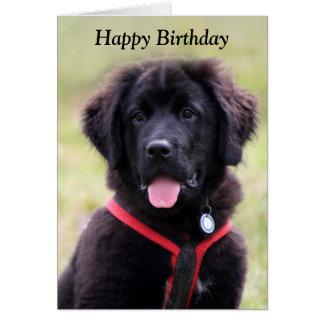 Foto-Geburtstagskarte des Neufundland-Hundewelpen Karte