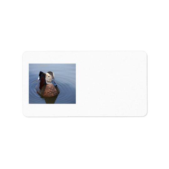 Foto-Raumaufkleber der Ente beringte aquamarine Adressaufkleber