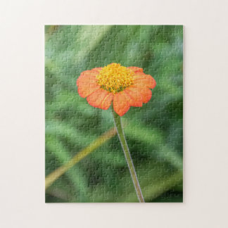 Fotopuzzlespiel des orange Gänseblümchens