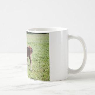 Fototasse Pferd Kaffeetasse