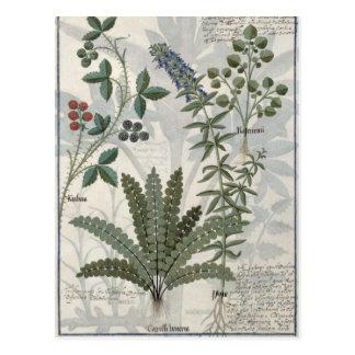 Fougères, mûres et fleurs cartes postales