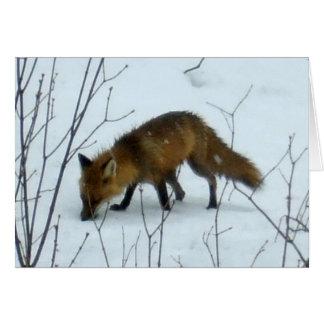 Fox im Schnee - leere Karte