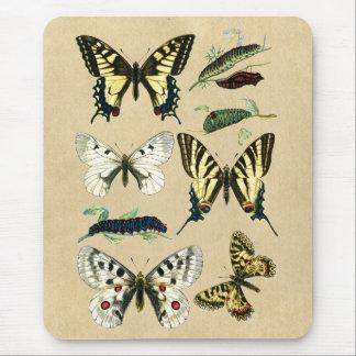 Frack-Schmetterlinge, Raupen und Motten Mauspad