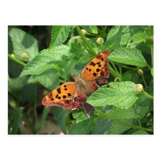 Fragezeichen-Schmetterling auf Lantana Postkarte
