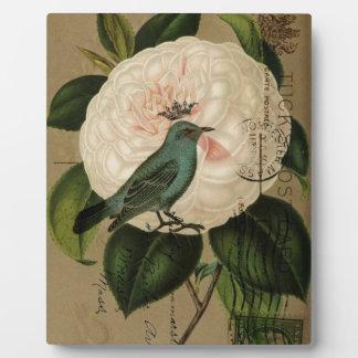 Französische botanische Kunst des Fotoplatte