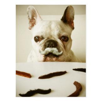 Französische Bulldogge mit einem Schnurrbart Postkarte