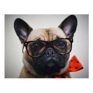 Französische Bulldogge mit Gläsern und Postkarte