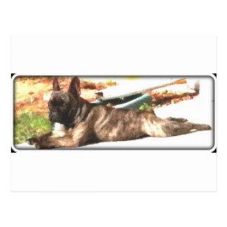 Französische Bulldogge Postkarte