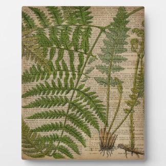französischer botanischer Druckfarn des Waldlaubs Fotoplatte