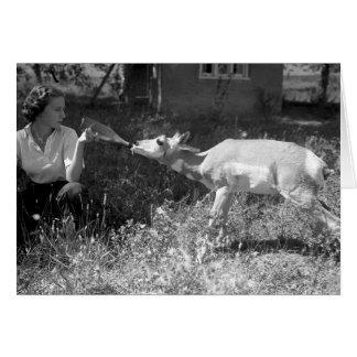 Frau, die eine Antilope Flasche-füttert Karte