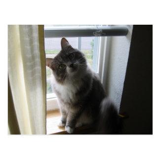 freche Katze Postkarte