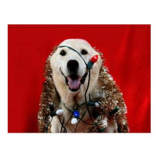 Freches Labrador-Weihnachten Postkarte