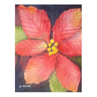 Friedliche Poinsettia Postkarte