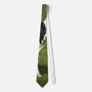 Friesische Kuh Krawatten