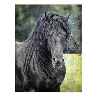 Friesischer Stallion Postkarte