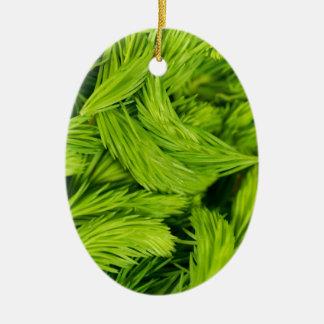 Frische grüne Sprösslinge der gezierten Bäume Ovales Keramik Ornament