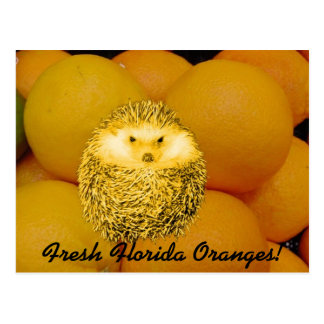 Frischer orange Igel Postkarte