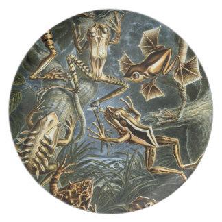 Froggy-Fantasien Essteller