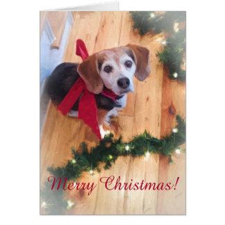 Frohe Weihnacht-Beagle-kundengerechte leere Karte