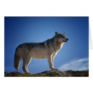 Fröhliches Lupercalia (Wolf) Grußkarte