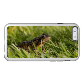 Frosch Incipio Feather® Shine iPhone 6 Hülle