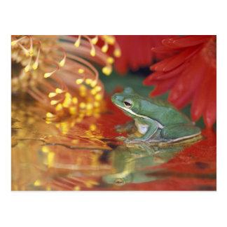 Frosch und Reflexionen unter Blumen. Kredit wie: Postkarte