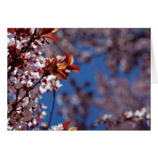 Frucht-Blüten Karte