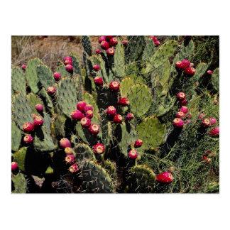 Früchte getragener Kaktusfeigekaktus, Sonoran Postkarte