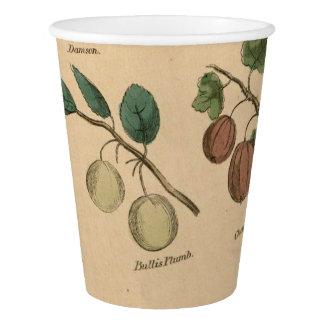 Früchte u. Blätter Pappbecher