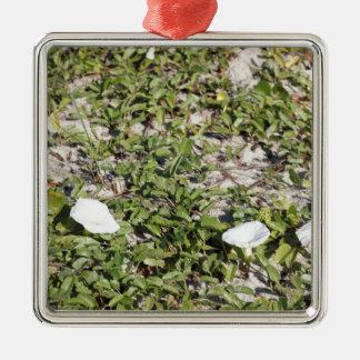 Frühe Strand-Sand-Winden Quadratisches Silberfarbenes Ornament