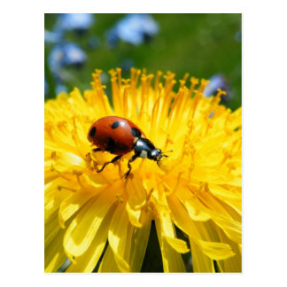Frühjahr-Marienkäfer auf Löwenzahn Postkarte
