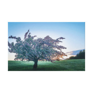 Frühjahr-Sonnenaufgang, geblühter Baum an der Leinwanddruck