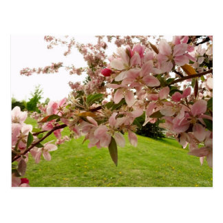 Frühling blüht Postkarte